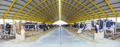 Industria de la agricultura del cultivo de ganado del establo foto de archivo