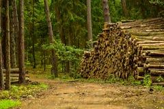 Industria de la madera, explotando los árboles Imágenes de archivo libres de regalías