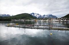 Industria dei pesci immagine stock