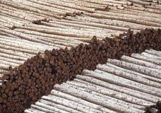 Industria del legname di Astoria Immagini Stock