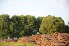 Industria del legno - ceppi dell'albero Fotografia Stock Libera da Diritti
