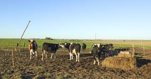 Industria del manzo in America Latina rurale Fotografia Stock