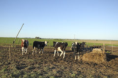 Industria del manzo in America Latina rurale Immagine Stock