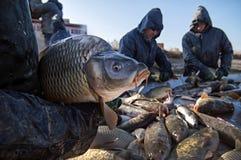 Industria della pesca Immagine Stock Libera da Diritti