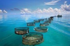 Industria della pesca marina sul mare del turchese Fotografia Stock