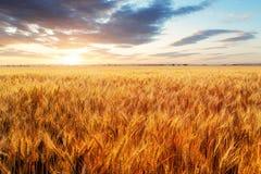 Industria di agricoltura Immagine Stock
