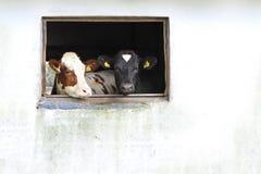 Industria di agricoltura, allevamento bestiame Immagine Stock