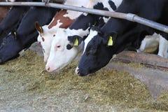 Industria di agricoltura, allevamento bestiame Immagini Stock Libere da Diritti
