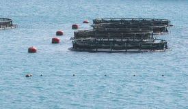 Industria di piscicoltura Immagine Stock