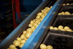 Industria di Potatoe immagini stock