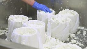 Industria di produzione di formaggio I lavoratori della latteria si chiudono sulla preparazione della pasta cruda del formaggio n video d archivio