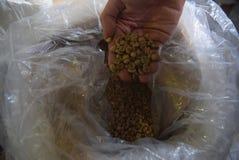 Industria elaborata del caffè Immagine Stock
