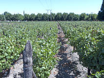 Industria enologica in valle di Maipo, Cile Fotografia Stock Libera da Diritti
