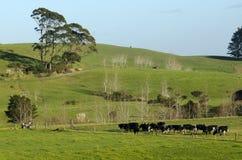 Industria lattiera - terreno coltivabile Fotografie Stock Libere da Diritti