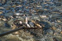 Industria pesquera  foto de archivo