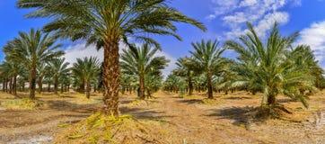 Industria tropicale di agricoltura in Medio Oriente Immagine Stock