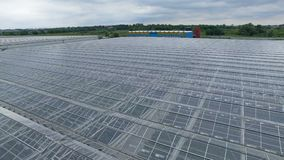 Industrial agricultural greenhouses 4k aerial view. Modern plantation glasshouse area from above. 4K. stock footage