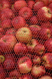 Industrial apples Royalty Free Stock Images