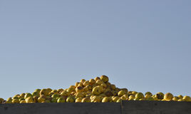Industrial apples Royalty Free Stock Photo