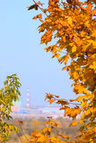 Industrial autumn. Autumn leaves removed against an industrial city Stock Image