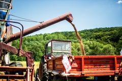 Industrial combine harvester unloading wheat Stock Image