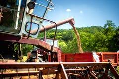 Industrial combine harvester unloads wheat grain Stock Images