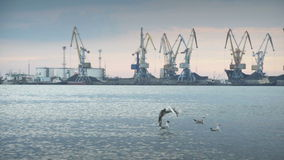 Industrial cranes on a wharf in a port stock footage
