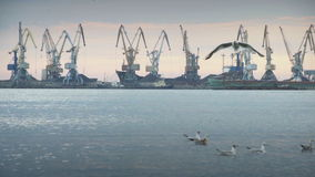 Industrial cranes on a wharf in a port stock video footage