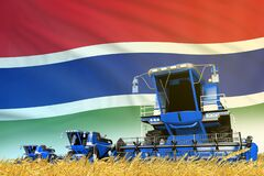 Industrial 3D illustration of blue farm agricultural combine harvester on field with Gambia flag background, food industry concept