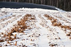 Industrial drained peat bog covered with snow and tree roots in rows. Landscape of industrial drained peat bog with tree roots and forest on background royalty free stock images