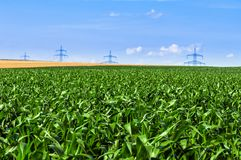 Industrial farmland before harvest Royalty Free Stock Images