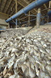 Industrial fish. In fish meal factory royalty free stock photos
