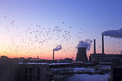 Industrial flock Stock Photo