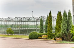 Industrial glass greenhouses in the city of Minsk in the afternoon Stock Photos