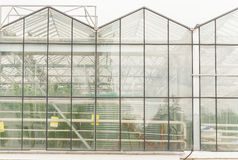 Industrial glass greenhouses in the city of Minsk in the afternoon Stock Images