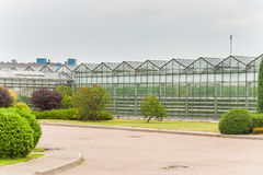 Industrial glass greenhouses in the city of Minsk in the afternoon Stock Photo