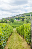 Industrial grape production Stock Photos