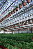 Industrial greenhouse Royalty Free Stock Images
