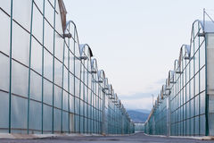 Industrial greenhouse endless glass window row Royalty Free Stock Photos