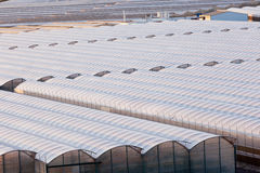 Industrial greenhouse to grow off-season veggies Royalty Free Stock Image