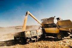 Industrial harvester unloading corn crops into tractor trailer royalty free stock images