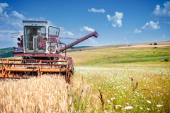 Industrial harvesting process with a specialized combine harvest Stock Photos