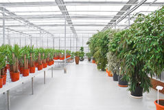 The Industrial hothouse. The Industrial hothouse, in which grow the decorative plants stock image