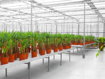 The Industrial hothouse. In which grow the decorative plants Royalty Free Stock Image