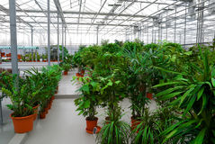 The Industrial hothouse. In which grow the decorative plants Royalty Free Stock Photo