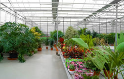 The Industrial hothouse. In which grow the decorative plants Royalty Free Stock Photography