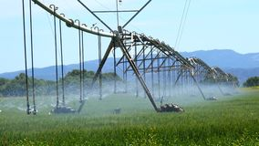 Industrial irrigation of crops (4K) stock video