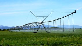 Industrial irrigation of crops (4K) stock video footage