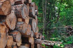 Industrial logging Royalty Free Stock Image
