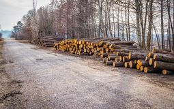 Industrial planned deforestation in spring fresh green alder lies on the ground along the highway royalty free stock image